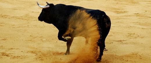 Hasta el rabo todo es toro